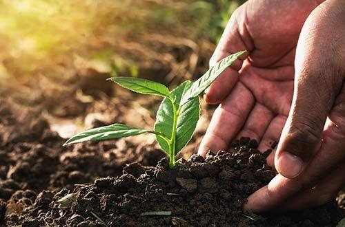 Quelle terre pour planter ses pivoines ?