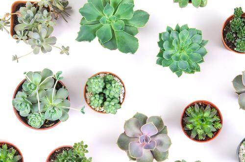 La tendance est aux plantes grasses, modernes et faciles à entretenir