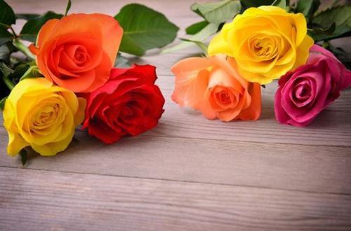 La rose, la reine des fleurs à offrir en toutes occasions