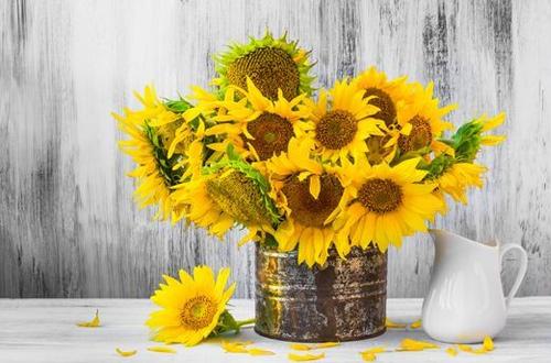 Le tournesol, la fleur idéale pour une composition champêtre