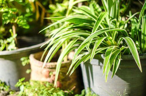 Les plantes dépolluantes pour assainir l'air de la maison