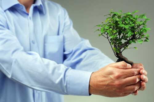 Pour la Fête des pères, offrez un bonsaï ou un olivier !
