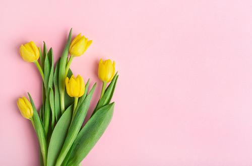 Découvrez la signification des Tulipes - Florajet