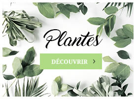 Collection de plantes