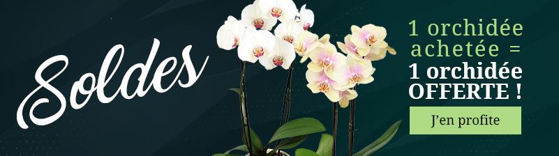 Soldes d'hiver : 1 orchidée achetée = 1 orchidée OFFERTE !
