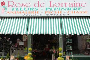 ROSE DE LORRAINE
