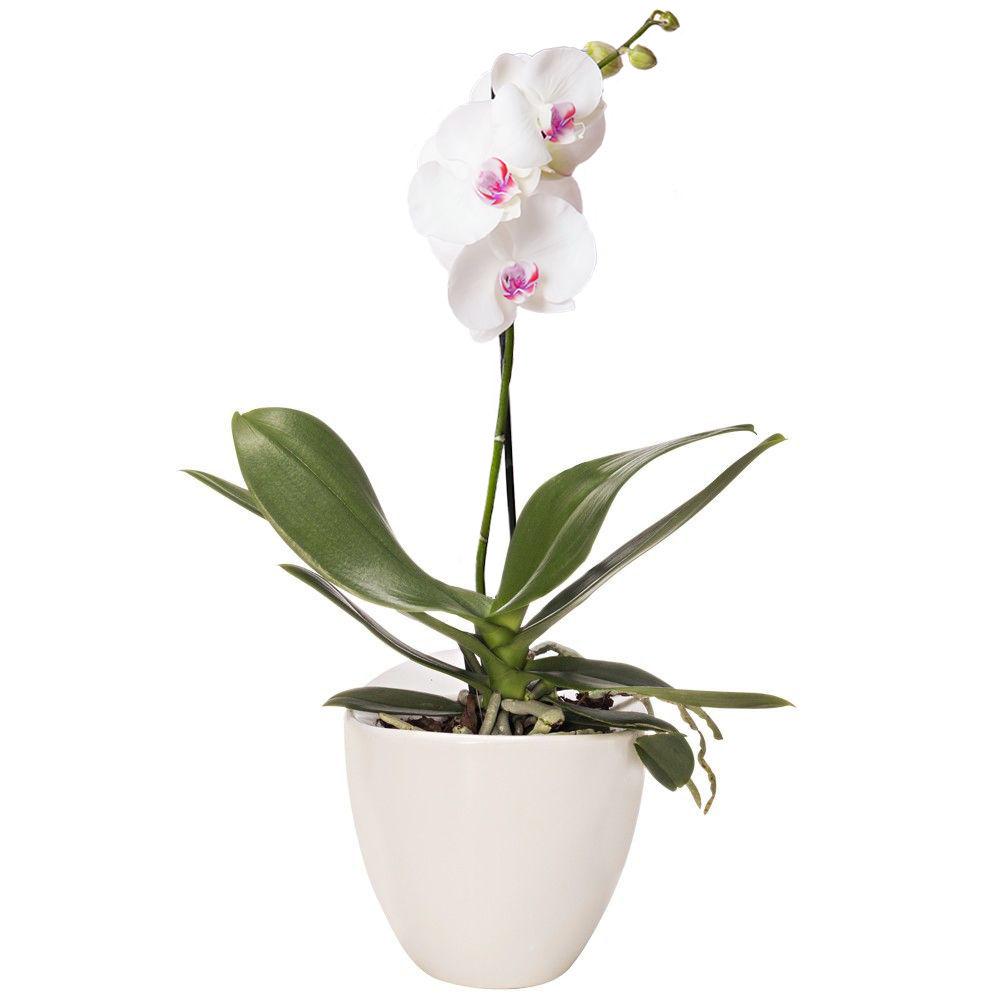 livraison d orchid es orchid e blanche 1 branche florajet. Black Bedroom Furniture Sets. Home Design Ideas