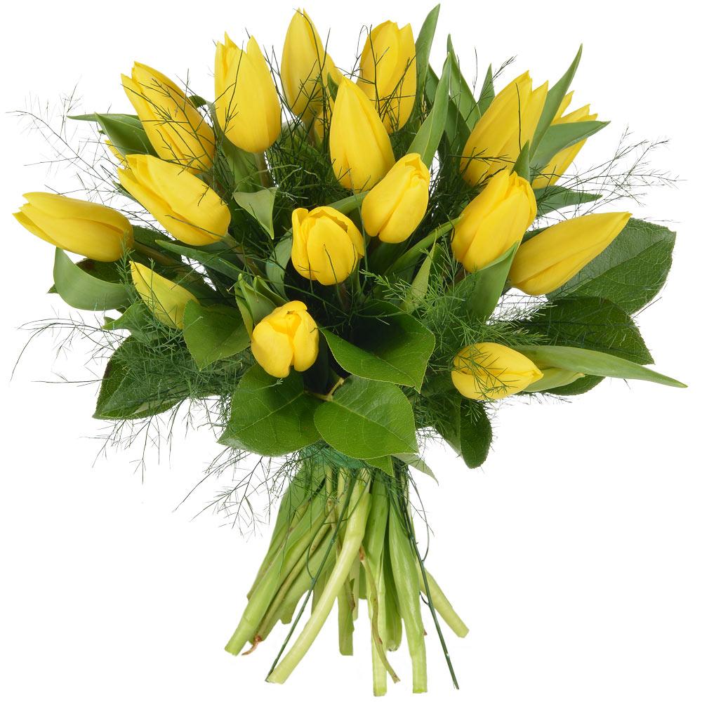Livraison express de tulipes jaunes tulipano florajet for Livraison tulipes
