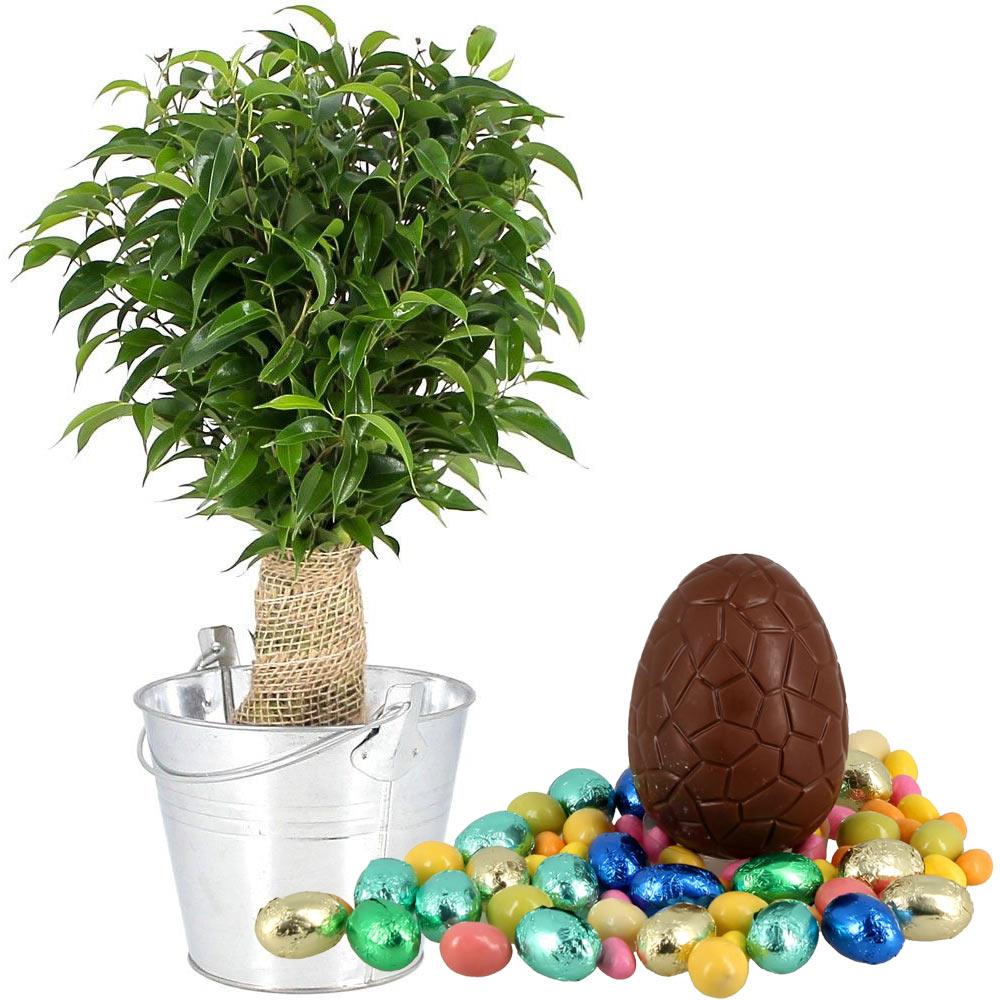 Plantes et arbustes bonsai ficus oeufs livraison for Plantes et arbustes