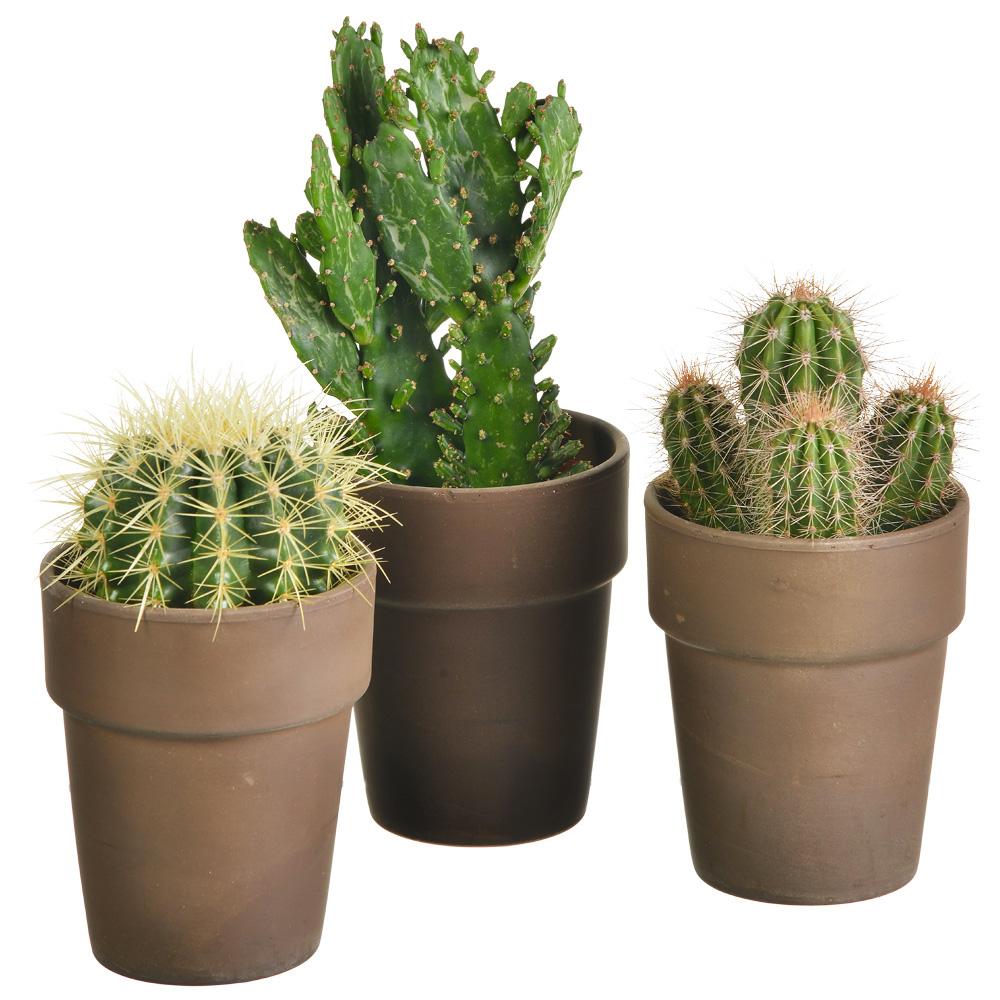 plantes et arbustes lot de 3 cactus pot livraison express florajet. Black Bedroom Furniture Sets. Home Design Ideas