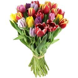 Florajet livraison de fleurs bouquets et cadeaux d s 22 for Livraison tulipes