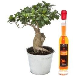 BONSAI + LIQUEUR 20CL