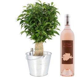BONSAI FICUS + VIN ROSE