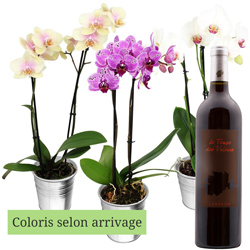 1 ORCHIDEE 2 BRANCHES + VIN ROUGE 75CL