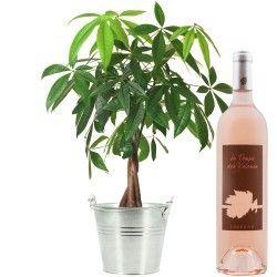 PACHIRA + VIN ROSE 75CL