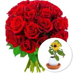 30 ROSES + OEUF SURPRISE