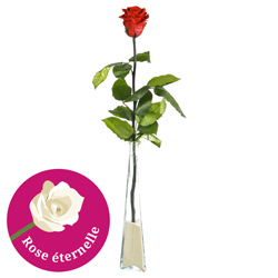 ROSE STABILISEE 70CM + SOLIFLOR
