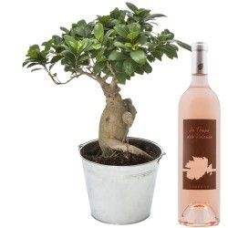 BONSAI GINSENG + VIN ROSE 75CL - 1