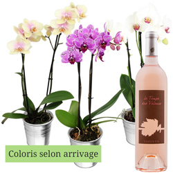 1 ORCHIDEE + VIN ROSE 75CL