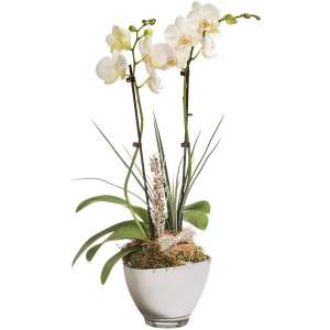 ORCHIDEE BLANCHE 2 BRANCHES