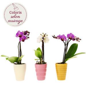 3 MINI ORCHIDEES + POTS CERAMIQUE