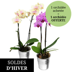2 ORCHIDEES 2 BRANCHES