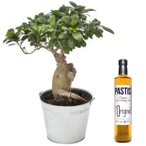 BONSAI + PASTIS OR