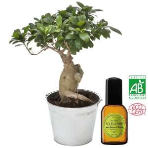 BONSAI + EAU DE TOILETTE