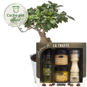 BONSAI + COFFRET TRUFFE