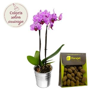 1 ORCHIDEE + AMANDES