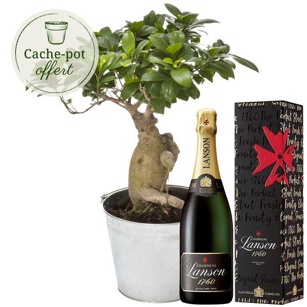 Cadeaux insolites BONSAI GINSENG + CHAMPAGNE LANSON BRUT 75CL