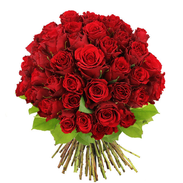 Bouquet de roses BOUQUET DE 60 ROSES ROUGES