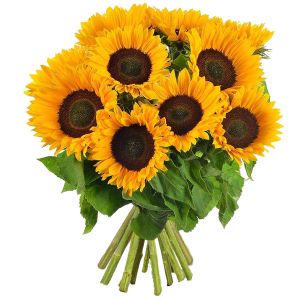 Longues tiges BOUQUET DE TOURNESOLS