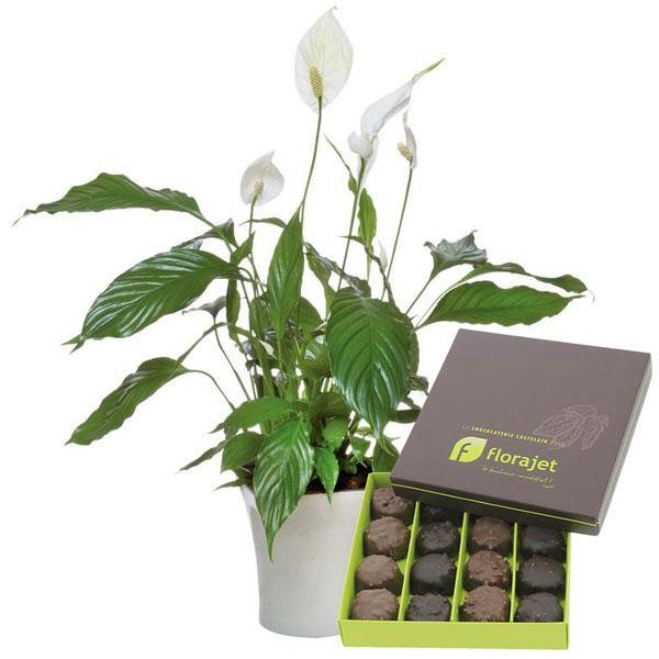 Cadeaux Gourmands SPATHIPHYLLUM + CHOCOLATS