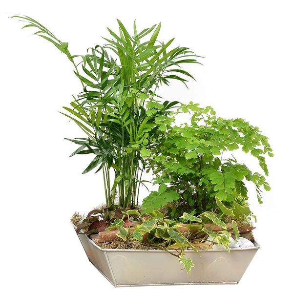 Plantes d'intérieur QUIETUDE