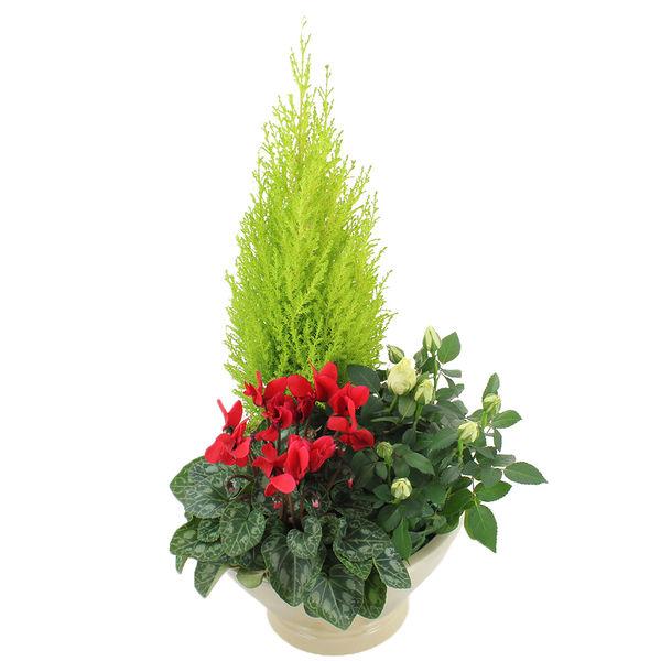 Plantes Deuil AFFINITE
