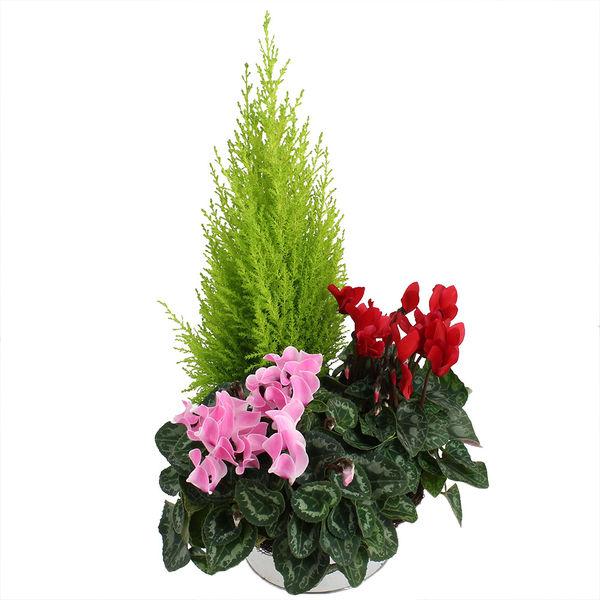 Plantes Deuil CEREMONIE