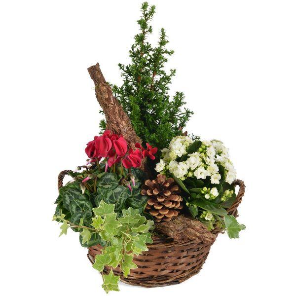 Plantes Deuil OFFRANDE