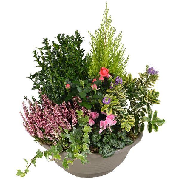 Plantes Deuil DEDICACE