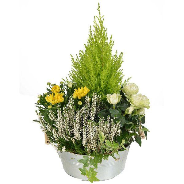 Plantes Deuil PAIX