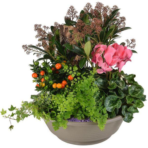 Plantes Deuil APAISEMENT