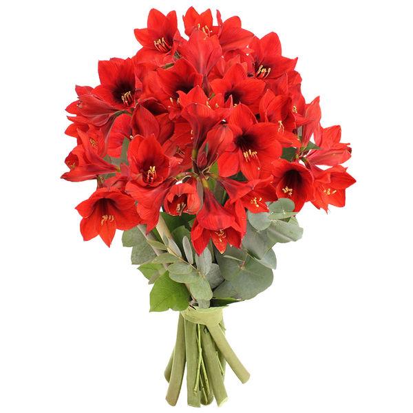 Bouquet rond 6 AMARYLLIS ROUGES + EUCALYPTUS