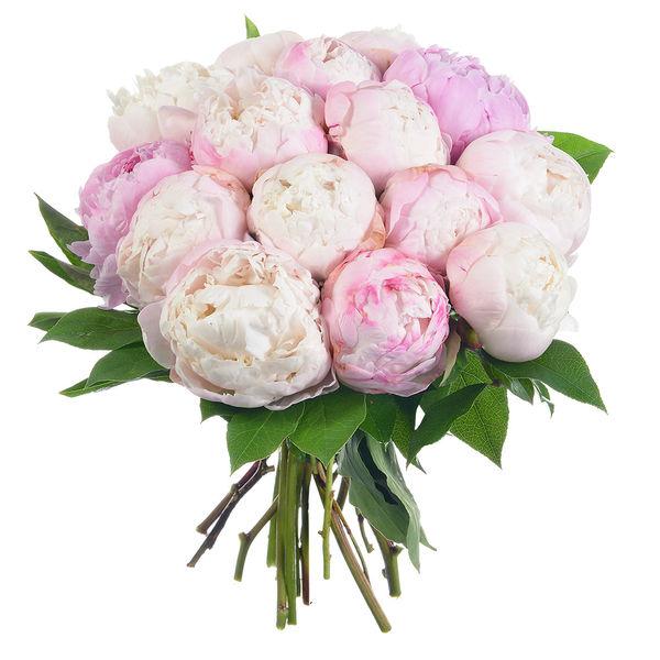 Bouquet rond 15 PIVOINES