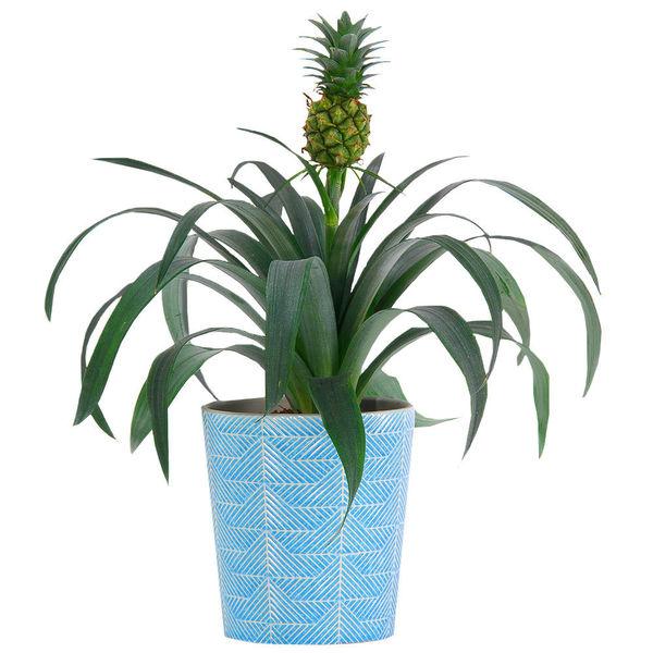 Plantes et Arbustes PLANTE ANANAS + POT EN CERAMIQUE