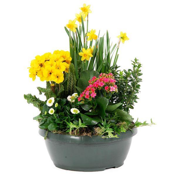 Bouquets composé TENDRE CARESSE