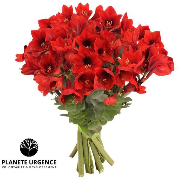 Bouquet rond 10 AMARYLLIS ROUGES + EUCALYPTUS