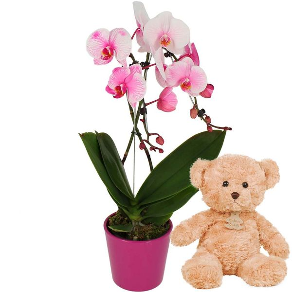 Cadeaux Naissance ORCHIDEE ROSE 2 BRANCHES + OURS BRUN