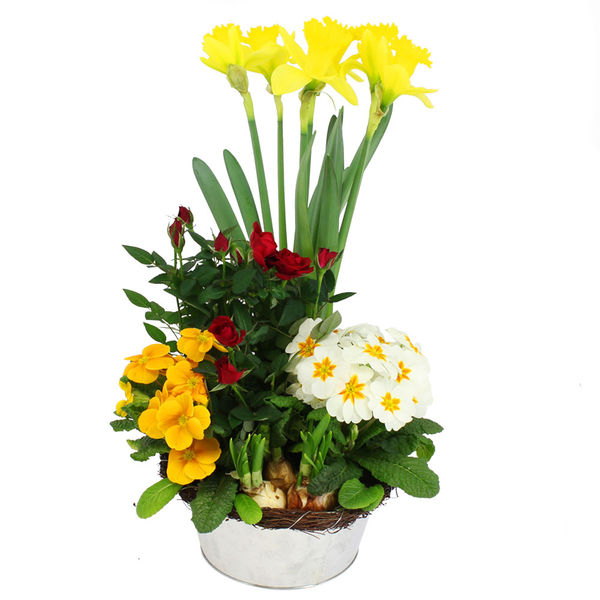 Plante fleurie JARDIN ENSOLEILLE