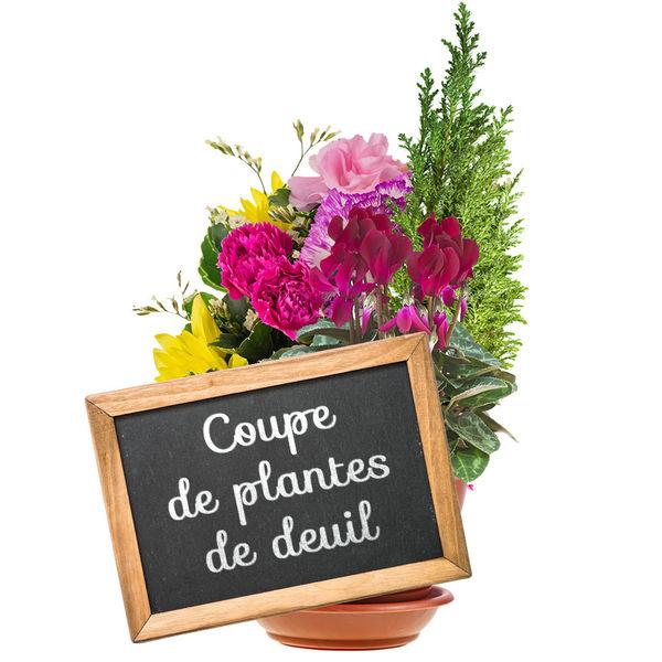 Plantes Deuil COUPE DE PLANTES DE DEUIL AU CHOIX DU FLEURISTE