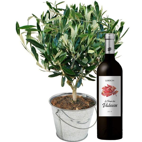 Plantes d'extérieur OLIVIER + VIN ROUGE